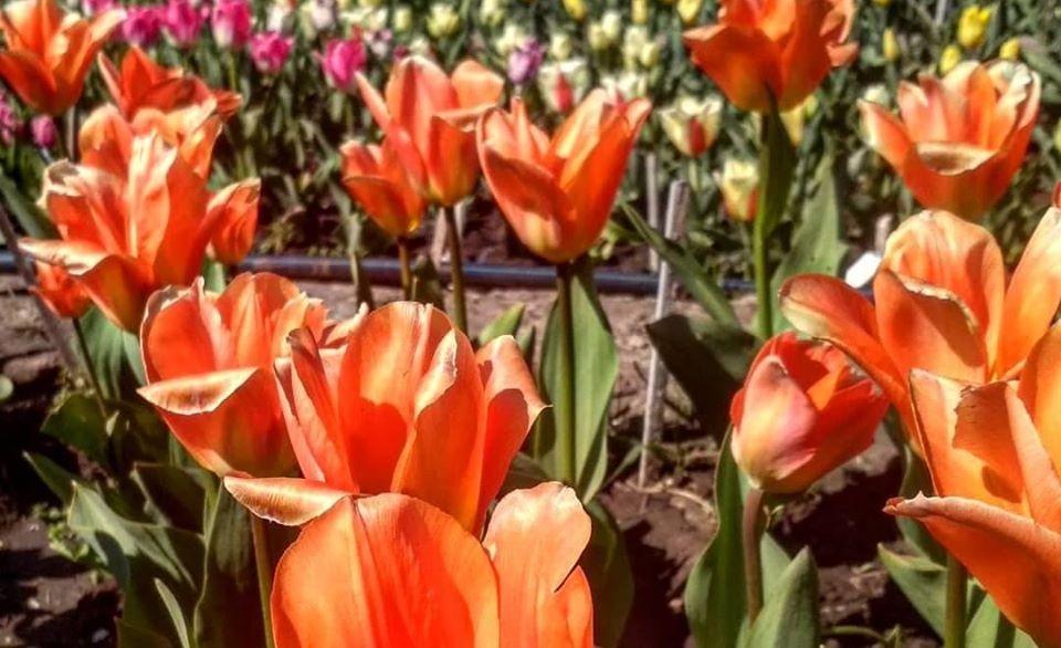 Фото фейсбук  Запорізький Ботанічний Сад