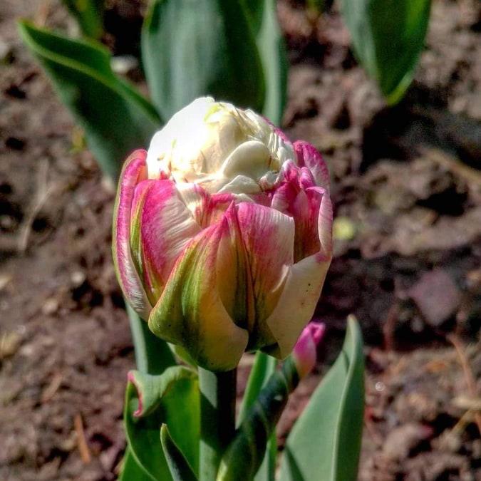 Фото: Запорізького ботанічного саду