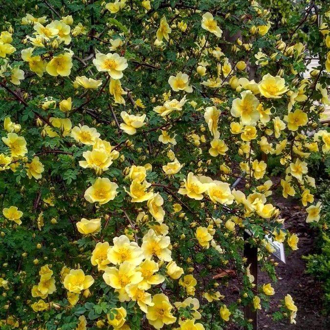 Фото зі сторінки у Фесубк Запорізького ботанічного саду