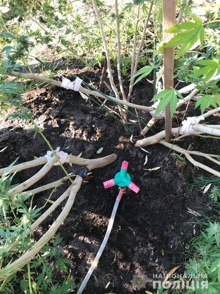Запоріжець вирощував коноплю на березі Дніпра